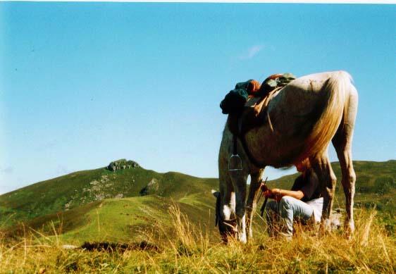 Ranch du Barrez - Equitation