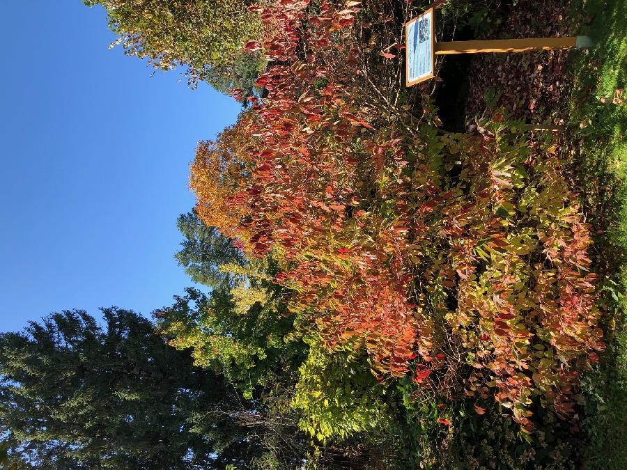 Parc-arboretum à La Barthe - Couleurs d'Automne