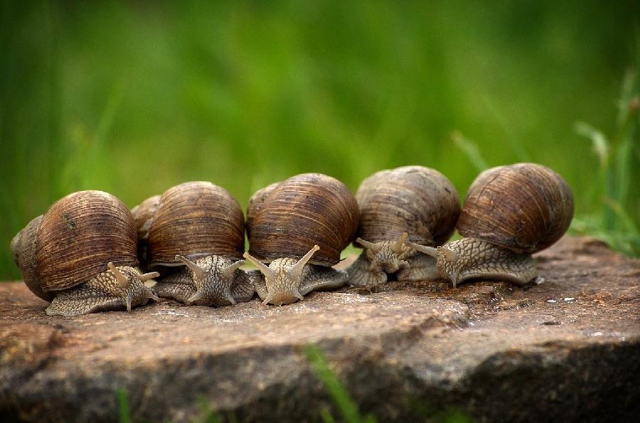 Les Escargots du Larzac