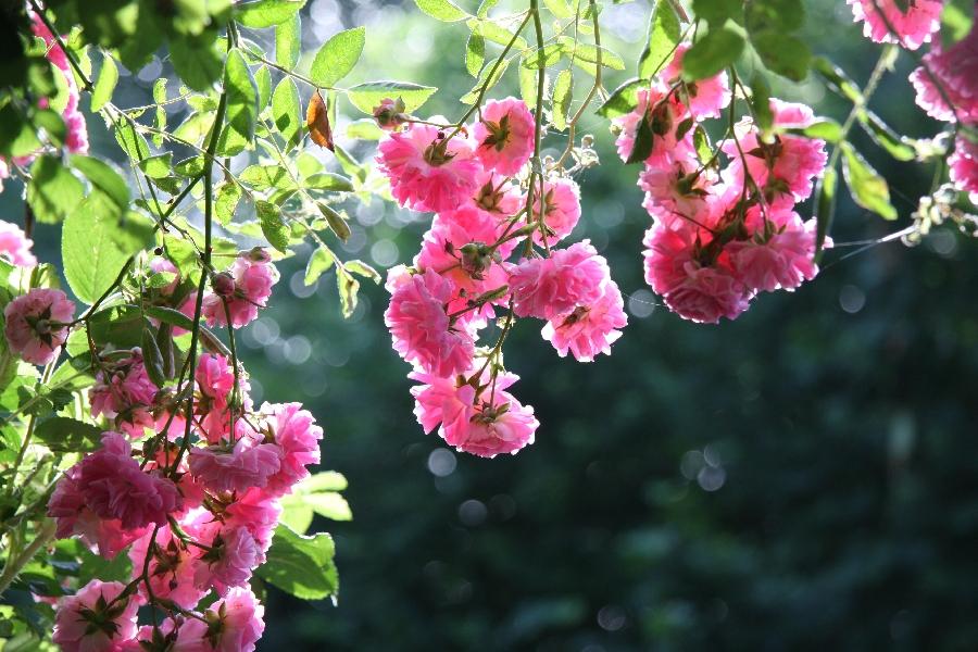 Journées du Patrimoine - Parc-Arboretum de La Barthe - ANNULÉ