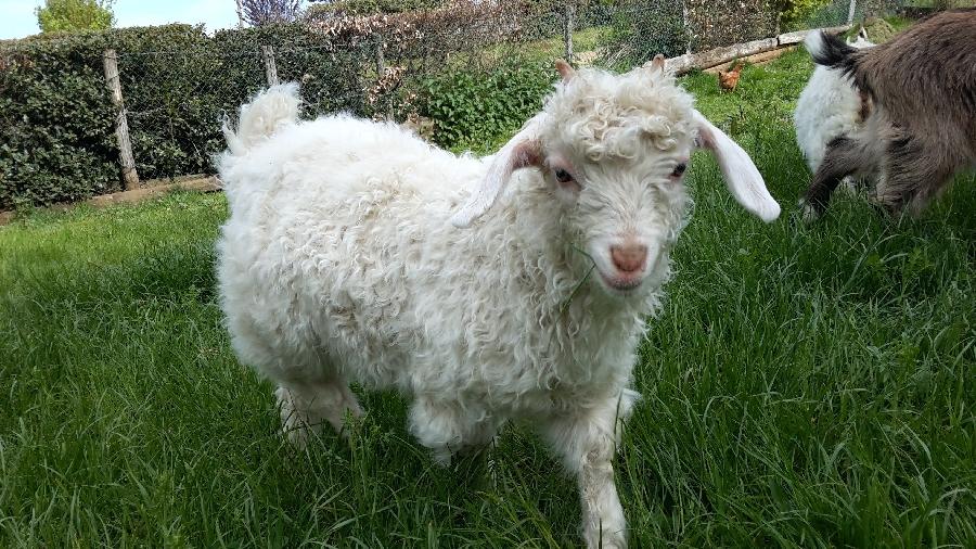 moutonblancfermedesbornottes