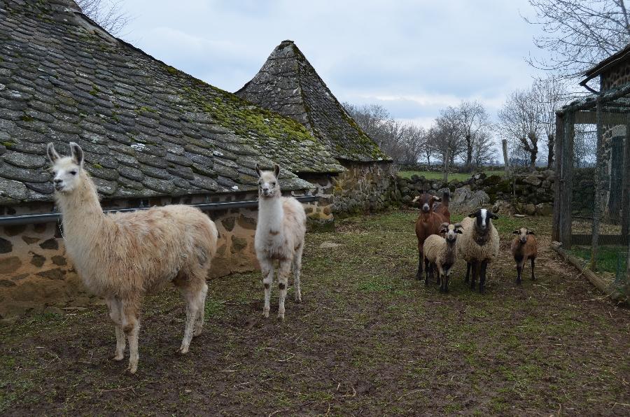 moutonsfermedesbornottes