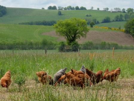 Vente d'oeufs frais de la ferme - Vidal Roland