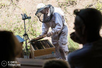 L'Arc en Miel : visite-immersion au coeur du monde des abeilles, Arnaud Caillou