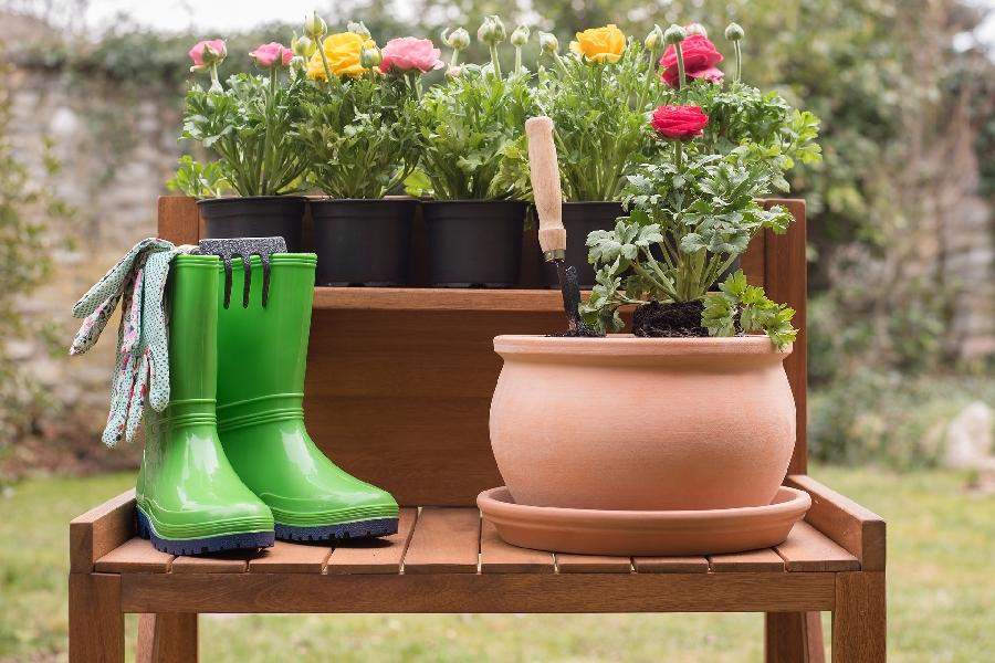 Gratuit Marché aux plants et aux fleurs ©Pixabay