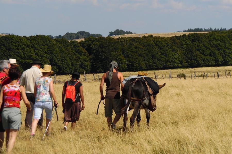 Balade accompagnée avec les ânes
