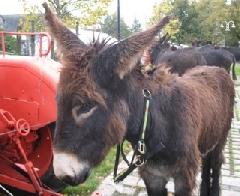 La Foire aux ânes