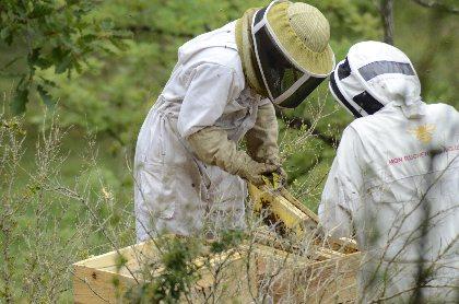 Récolte du miel, Etienne Viviane Rames