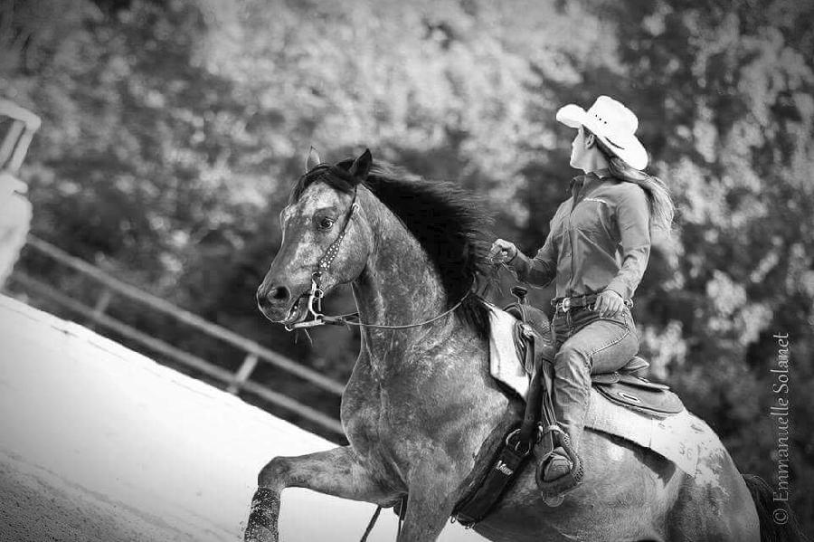 Roc'Aubrac - école d'équitation Western