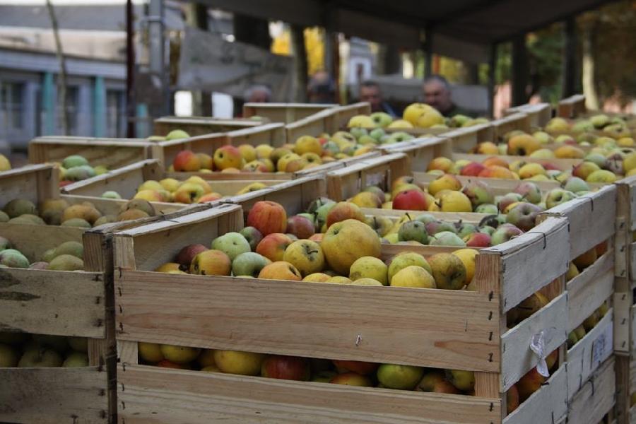 Journée Jus de pommes