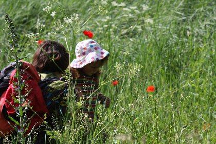 initiation aux familles des fleurs