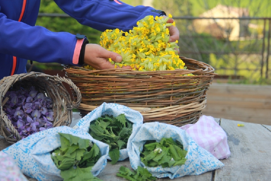 Stage cueillette et cuisine avec les plantes sauvages (SolStisse)