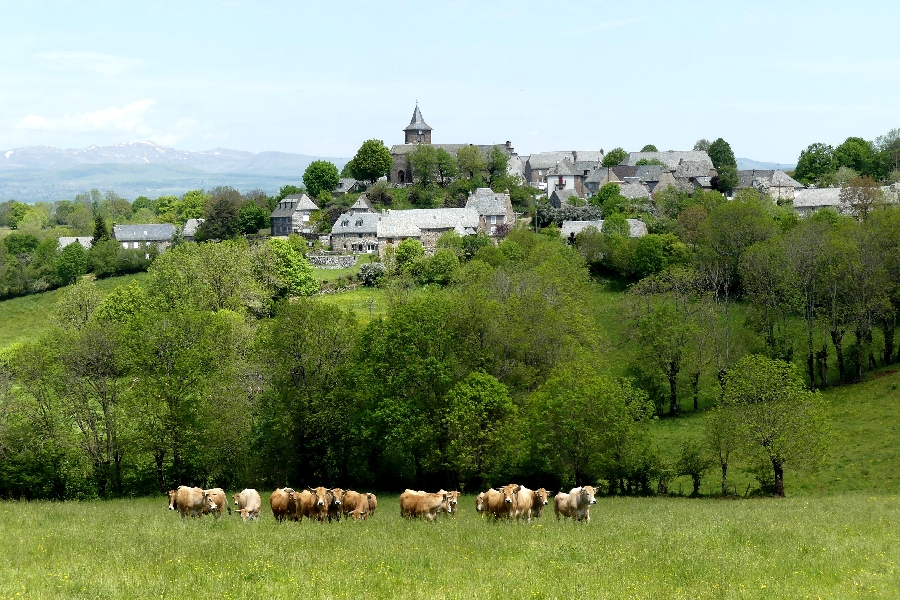 Village de Vines