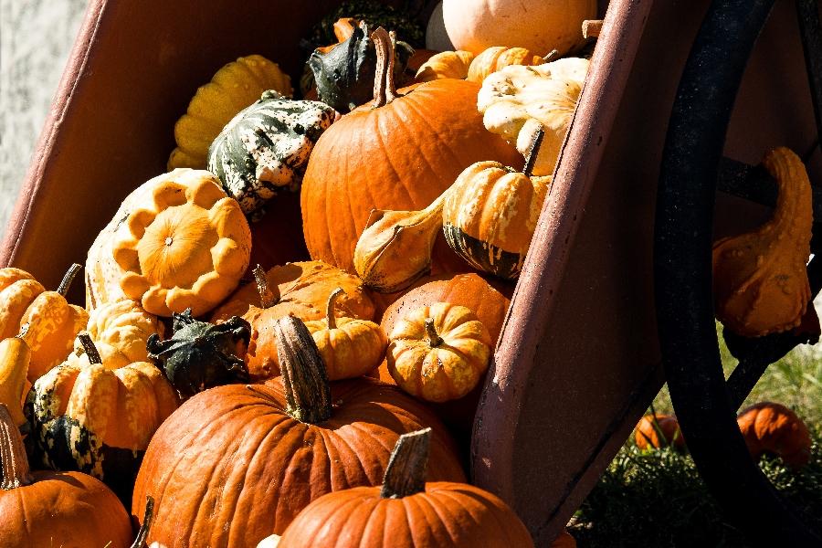 Marché aux saveurs d'automne