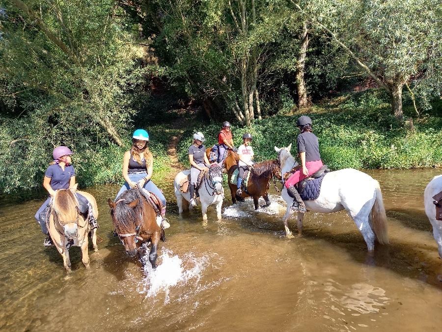 Les poneys de Patchanka
