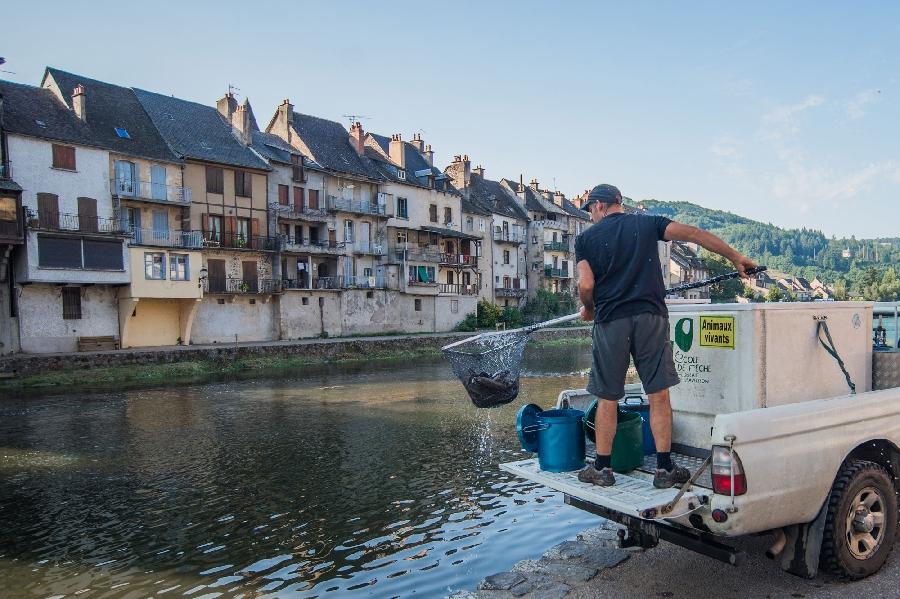 Lâchers de truites - Rivière Aveyron à la Plaine du Pesquié proche de Villefranche-de-Rouergue