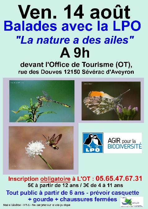 Sorties Nature avec la LPO à Sévérac d'Aveyron