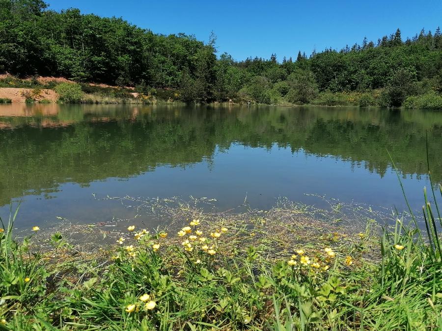 Aire de pique-nique du Lac des Bruyères à Bertholène