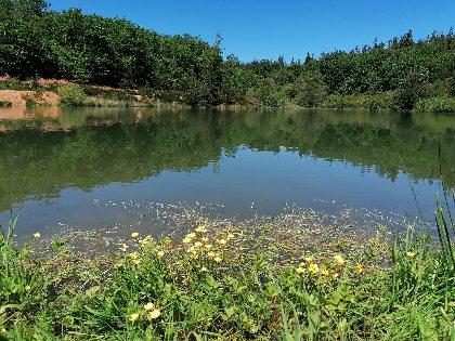 Aire de pique-nique du Lac des Bruyères à Bertholène, Office de Tourisme des Causses à l'Aubrac