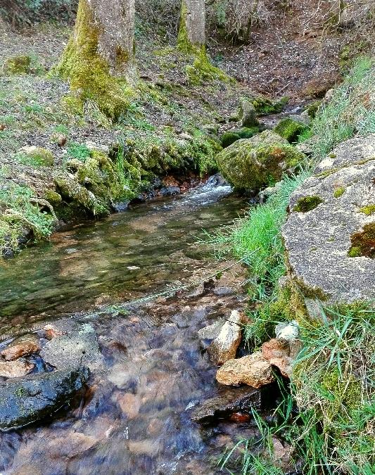 Aire de pique-nique aux Sources de l'Aveyron
