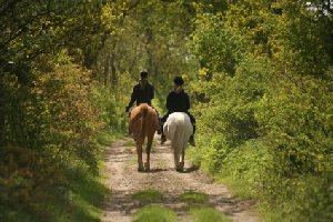 Les F'Estivales des Causses à l'Aubrac : cours d'équitation pour confirmés