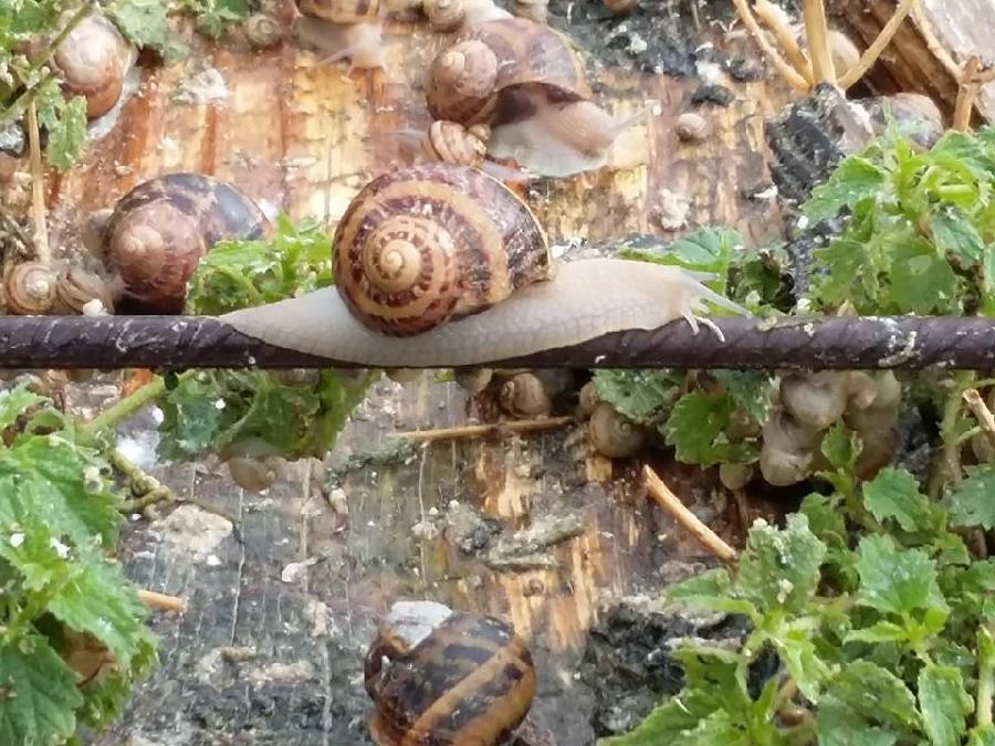 Semaine Gourmande avec l'Escargot des Sarradelles