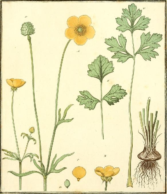 Balade botanique : reconnaissance et vertu des plantes