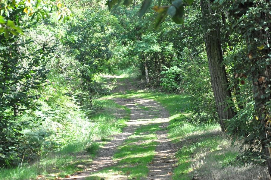 La Forêt de la Vaysse