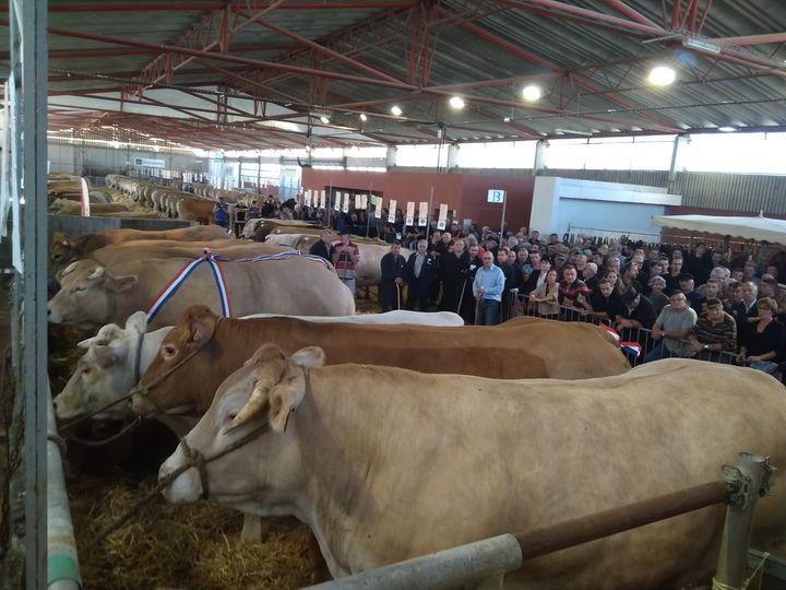 Festival Festiboeuf - Concours national d'animaux de boucherie