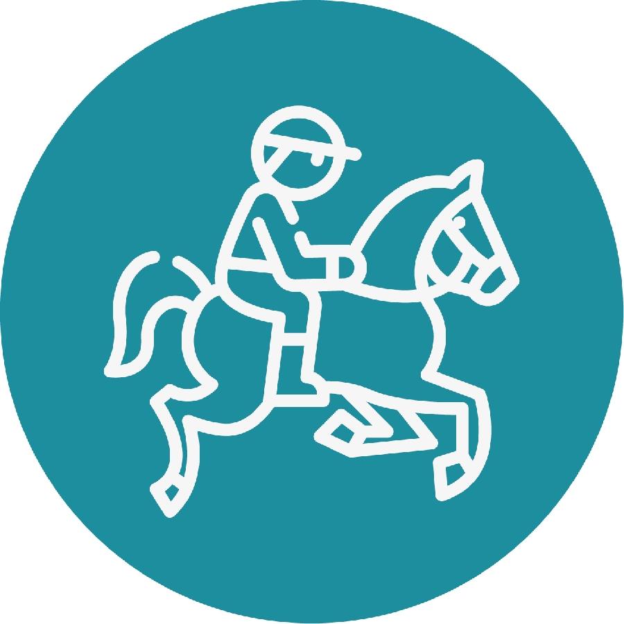 Soins aux chevaux et poneys