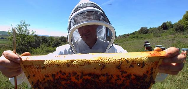 Stage apiculture