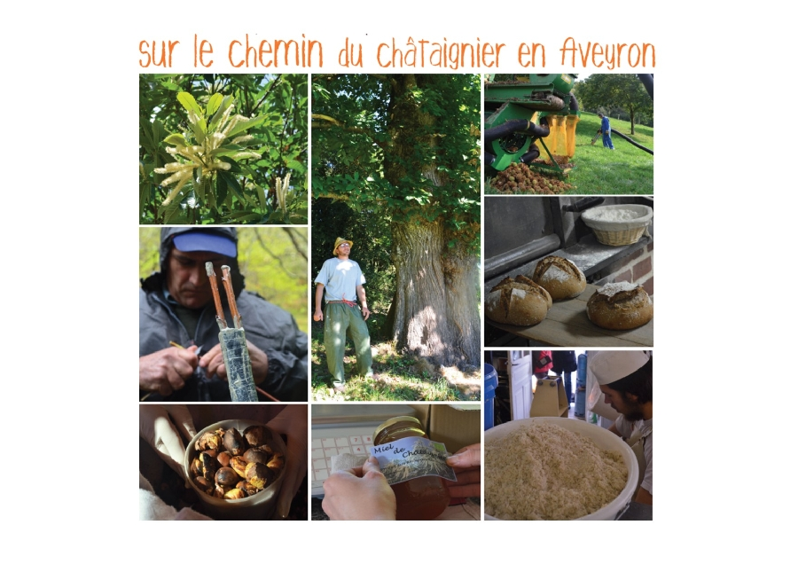 Sur le chemin du châtaignier en Aveyron