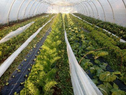 Les légumes des cailleries, OFFICE DE TOURISME AVEYRON SEGALA