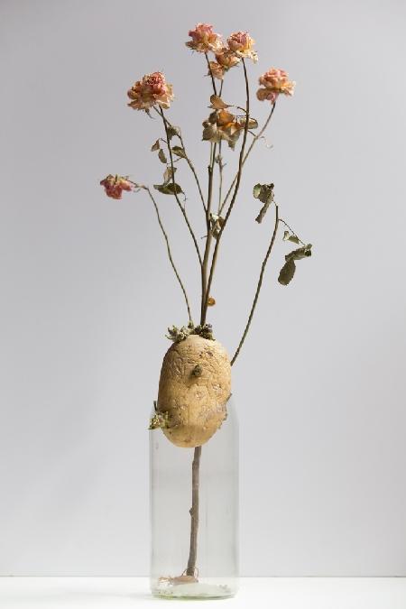 EXPOSITIONS - Photographies de nature morte par Carole Rey