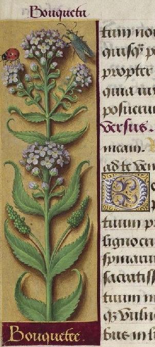 Journées du patrimoine - Découverte de la ville d'Espalion avec Dame Hortense et son herboriste Daturine