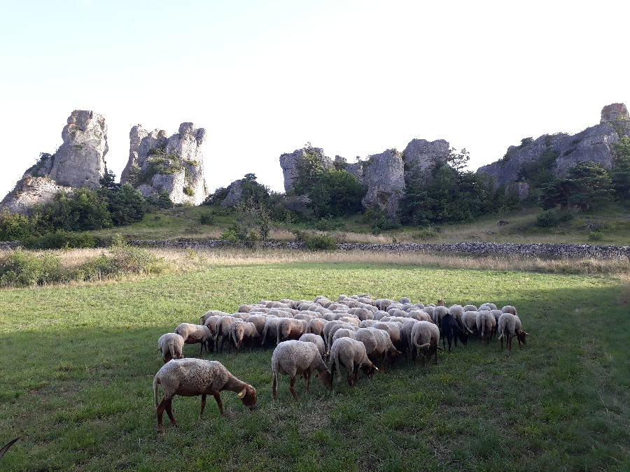 Rando découverte du site de Roquesaltes (Causse Noir)