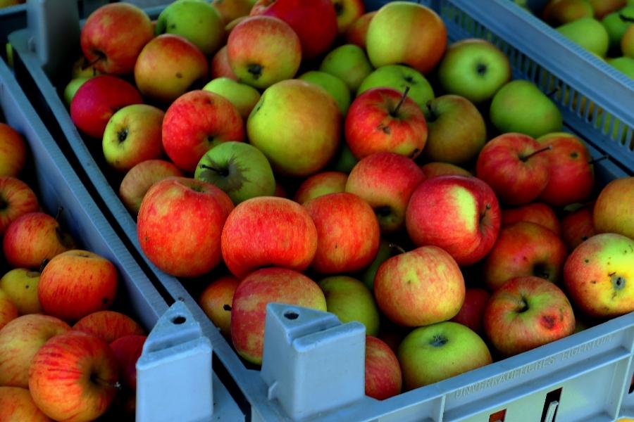 Journées Jus de Pomme